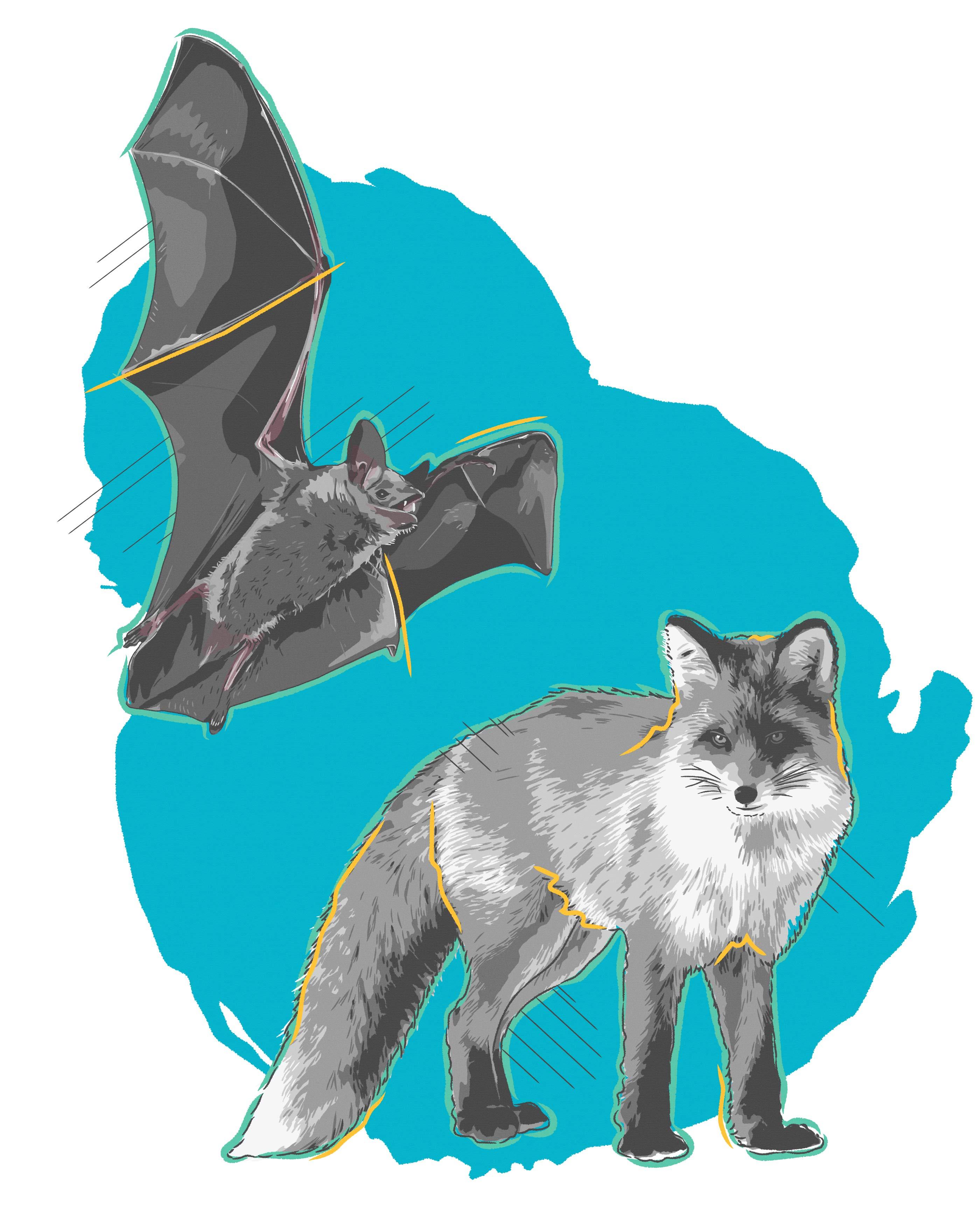 Halmar International Wildlife Sample